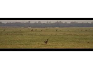 Hans van der Elst fotografeert reeën bij de Slikken van Flakkee