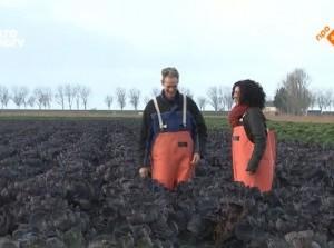 Paarse spruitjes uit Dirksland op TV bij Binnenstebuiten