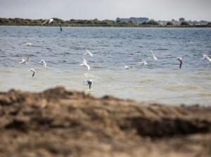 [Video] Opening vogel-en viseiland Bliek: laat de vogels en vissen maar komen