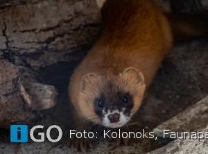 Faunapark Flakkee in top 10 Leukste uitjes provincie Zuid Holland