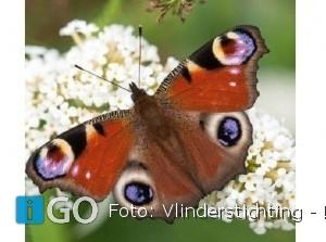 Opening twee vlinderidylles op Goeree-Overflakkee