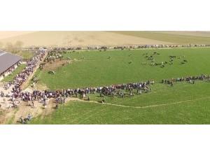 Boerenerfmarkt Stellendam